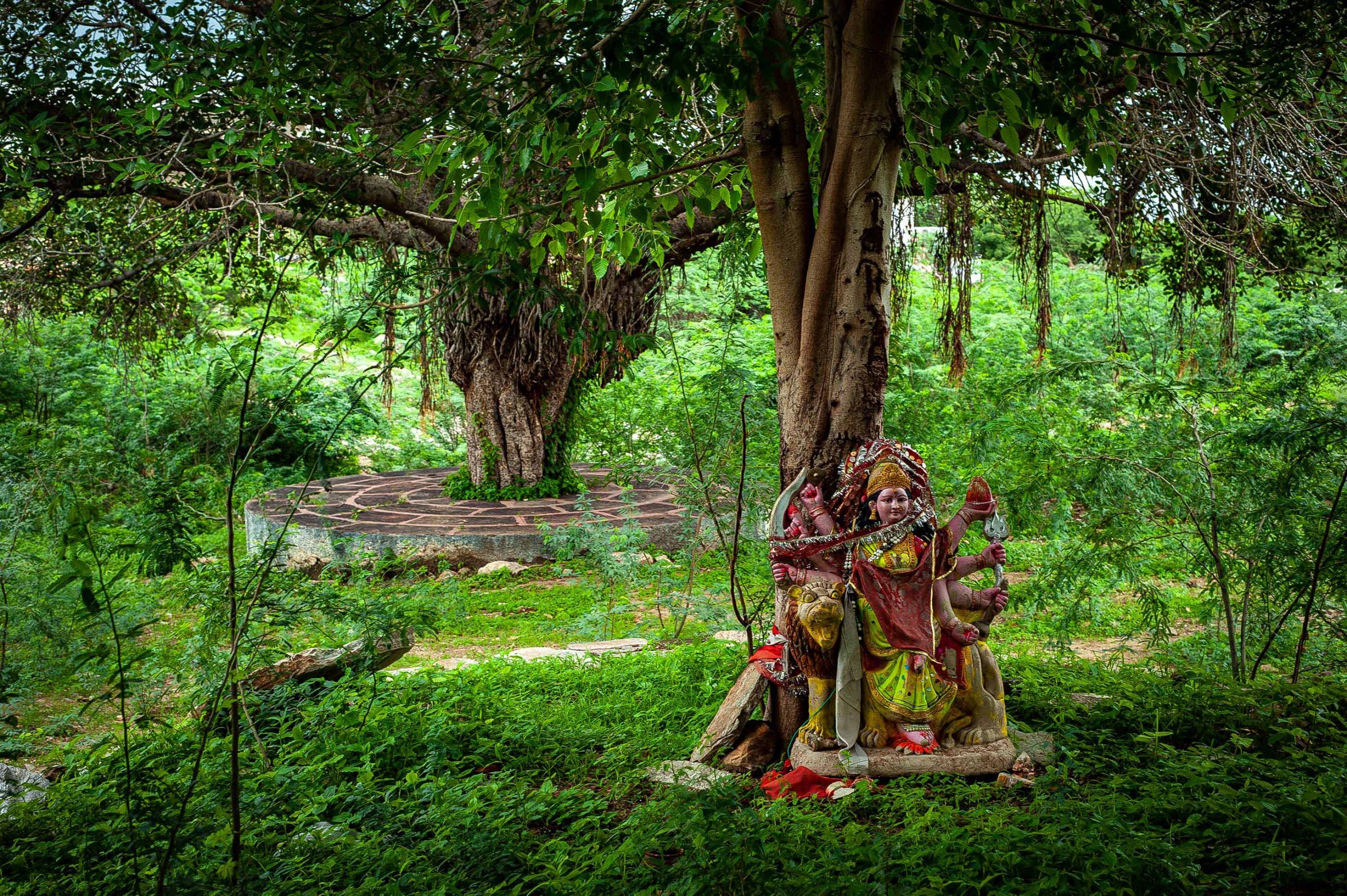 One Hundred and Eleven Trees – Emergence Magazine